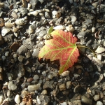 Wordless Wednesday: Fall Colors