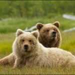 Family Movie: Disneynature's Bears