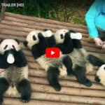 Pandas Is A Fun Family Documentary #IMAXPandas