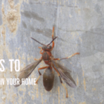 How Proper Pest Control is Important to the Health of the Family