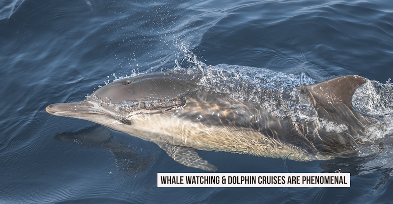 Find out why Whale Watching & Dolphin Cruise are phenomenal