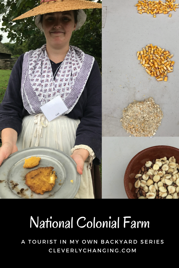Guardseed corn and corn patties on the National Colonial Farm