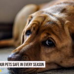 How to Keep Your Pets Safe in Every Season