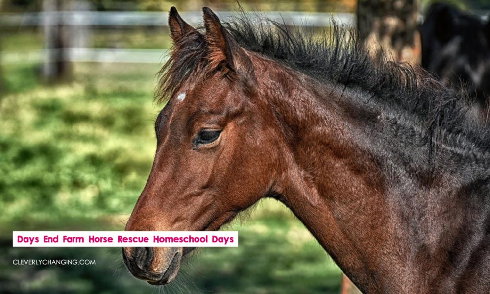 Days End Farm Horse Rescue Homeschool Days